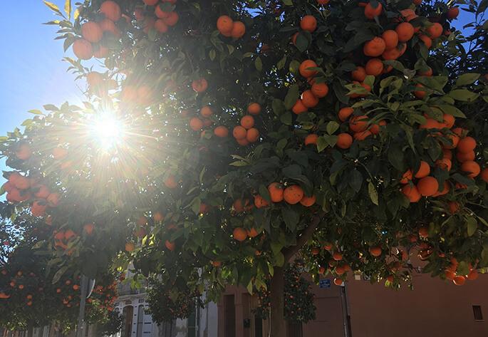 Valencian oranges everywhere